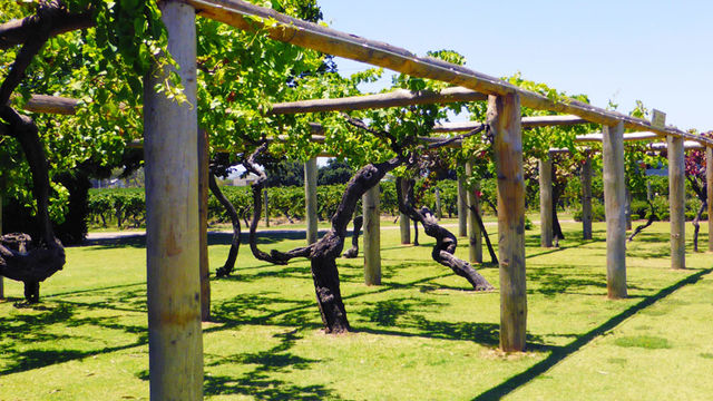 Swan Valley Gourmet Wine Cruise